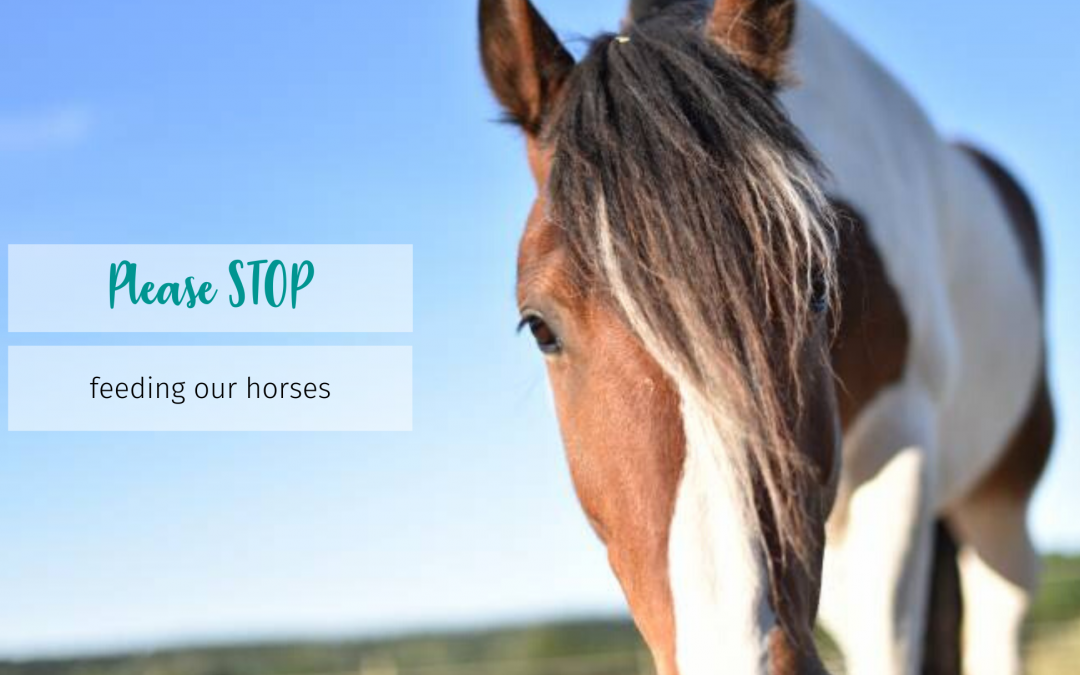 Please stop feeding our horses